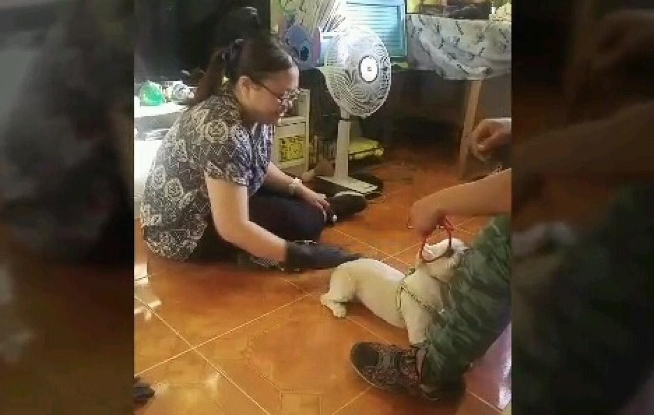 在訓練師的教導之下,Pearl慢慢地學習接觸Cha Cha。(受訪者提供)