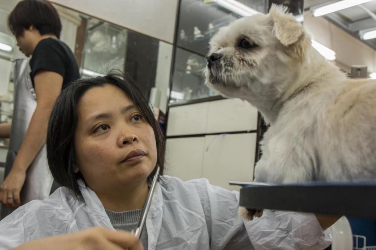 美容師阿儀說:「一隻這樣的狗,如果我不替牠做,我猜沒有人願意幫牠。」(張浩維攝)