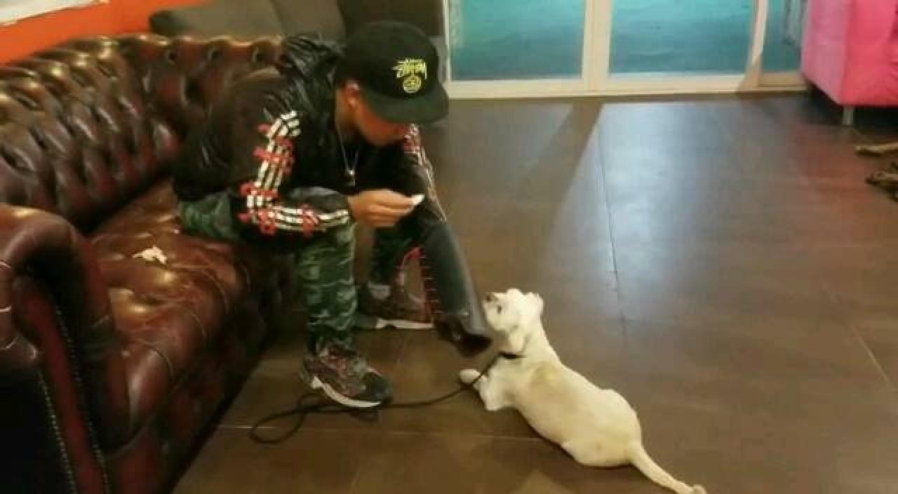 阿輝師承香港犬隻訓練總會張松照師傅,他穿上保護裝備,為Pearl夫婦訓練Cha Cha。(受訪者提供)