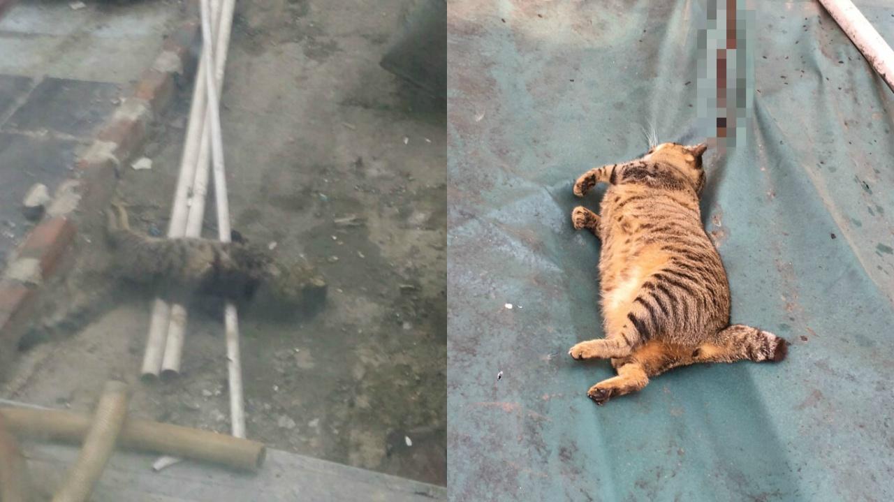 昨晚同一地點也發現死貓,動物義工懷疑有人毒殺流浪貓。(Home Dog Home提供)
