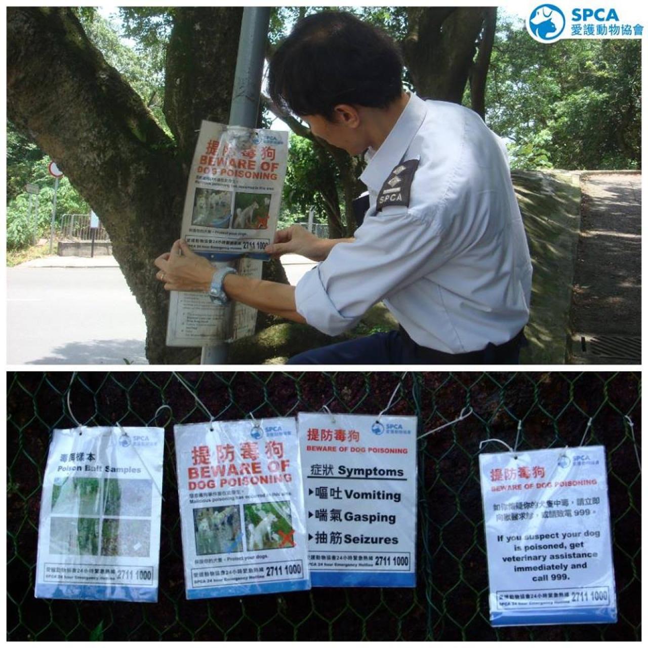 愛協人員在寶雲道一帶張貼告示,提醒狗主保護愛犬。(愛協圖片)