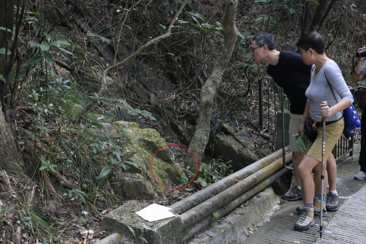 毒餌被放置在路邊斜坡,人們若非仔細觀察難以發現,但狗隻卻可輕易觸及。(呂凝敏攝)