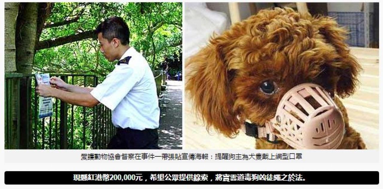 愛協網頁指出懸紅20萬元緝兇。(SPCA網頁)
